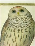 Owl Post Card 1911