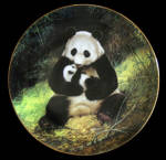 Panda: Last Of Their Kind, Will Nelson, Ws George Plate