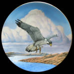 Coastal Journey: Majesty Of Flight, Thomas Hirata, Hami