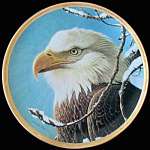 Ruler Of The Skies: Portraits Bald Eagle, Pitcher Plate
