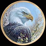 Spring's Sentinel: Portraits Of Bald Eagle Pitcher Plat