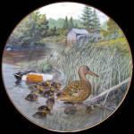 Northern Shoveler: Living With Nature By Bart Jerner