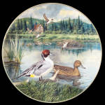 Pintail: Living With Nature A Bart Jerner Knowles Plate