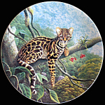 Margay: Great Cats Of America By Lee Cable, Knowles