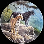 Jaguar: Great Cats Of America By Lee Cable, Knowles