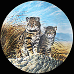 Pampas: Great Cats Of America By Lee Cable, Knowles