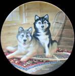 Siberian Husky: Lodging A Complaint: It's A Dog's Life