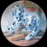 Dalmation: We've Been Spotted: Dog's Life By Lynn Kaatz