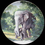 Asian Elephant: Last Of Their Kind, Will Nelson, George