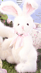 Bearington Plush Rabbit Bows Bunny