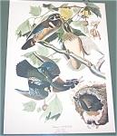 Vintage Audubon Prints: Birds : Summer Or Wood Duck