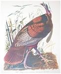 Vintage Audubon Prints: Birds & Nature: Wild Turkey