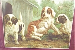 Vintage Print: Dog Dogd Puppy Puppies Litho