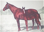 Vintage Equestrian Prints: Horse And Colt Hand Colored