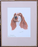 R H Mackowsky Watercolor Of Champion Cocker Spaniel Dog