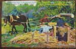 Makin Molasses By Mule Power - Missouri Ozarks Postcard