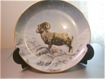 Greg Perillo Wildlife Plates-mountain Sheep
