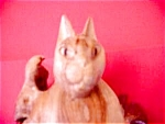 Unusual Cat Carved From Wood