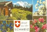 Flowers And Alpen Horn Switzerland Cs10295