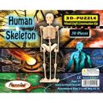 The Human Skeleton Model Wood Craft Construction Kit