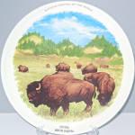 Custer South Dakota Buffalo Souvenir Plate