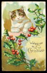 Christmas Cat/kitten In Holly 1908 Postcard