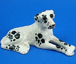 K1631 Harlequin Great Dane Dog