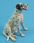 R134 Dalmatian With Sunglasses