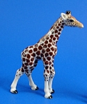 R295a Giraffe Baby, Walking