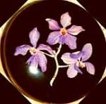 Villeroy & Boch Luxembourg Vitro Porcelaine Orchidee 4 In Trinket Box Purple Lavender