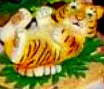 Protect Nature's Innocents Bengal Tiger Endangered Species Animal Hamilton Manning Bs