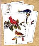 Audubon Bird Pictures Lithographs
