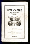 Beef Cattle In Florida