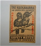 The Kookaburra (The Laughing Jackass)