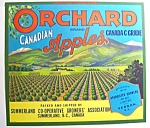 Orchard Canadian Apple