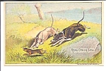 Dogs Hunting Trade Card, A C Yates, Pa