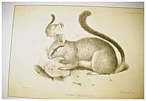 J Smit  Antiquarian Lithograph (Image1)