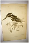 Click here to enlarge image and see more about item 2066: Audubon Print by J. Smit