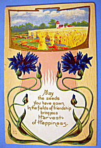 Harvest Of Happiness Postcard