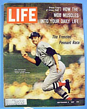 Life Magazine-September 8, 1967-Carl Yastrzemski (Image1)