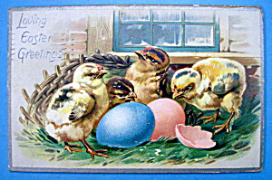 Loving Easter Greetings Postcard By Tuck's (4 Chicks) (Image1)
