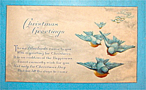 Christmas Greetings Postcard With Birds Flying (Image1)