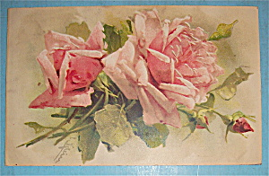 Flower Postcard with 2 Pink Roses (Image1)