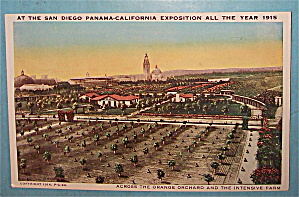 Across The Orange Orchard Postcard (Image1)