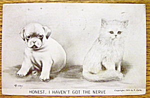 A Cat And Dog Sitting Side By Side Postcard