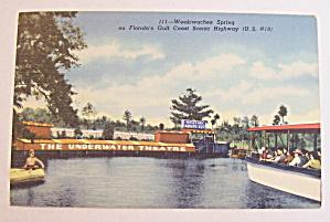 Weekiwachee Spring (Underwater Theatre) Postcard (Image1)