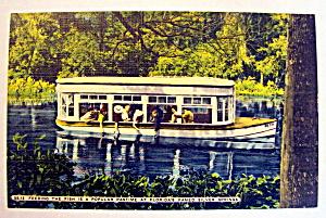 Feeding Fish At Florida Famed Silver Springs Postcard (Image1)