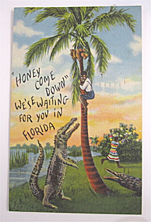 Black Man Hiding In Tree From Alligator Postcard