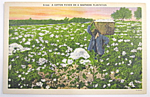 Cotton Picker On Southern Plantation Postcard (Image1)