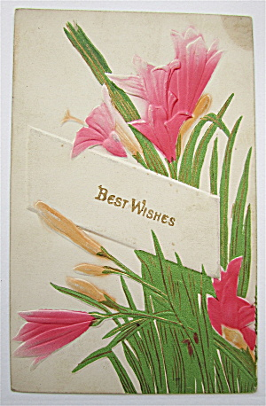 Pink Flowers And Green Leafs Postcard (Image1)